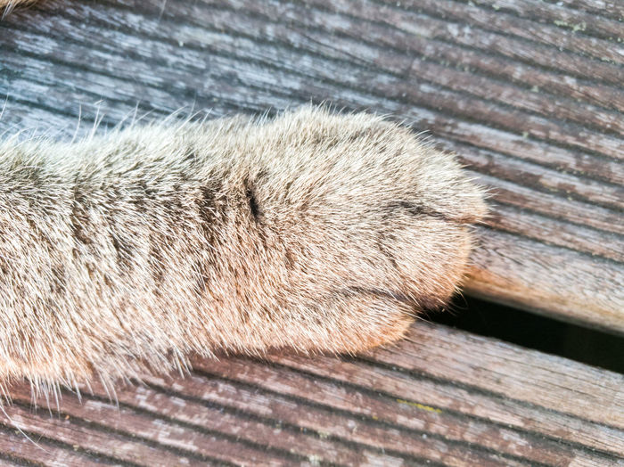 No People Close-up Nature Outdoors Animal Pets Animal Themes Cats Of EyeEm Cats 🐱 Paw