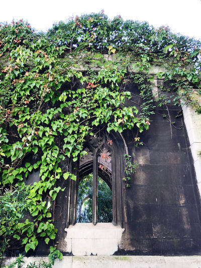 Ivy growing on tree against building