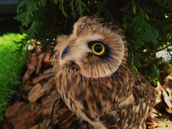 EyeEm Selects Eye Looking At Camera Portrait Animal Wildlife Close-up One Animal Nature Tree Closing Human Eye Blue Outdoors Bird Owl Day Beauty In Nature Space Bird Of Prey People