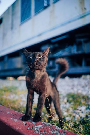like a boss !! Domestic Cat Animal Themes Domestic Animals Focus On Foreground Feline One Animal Mammal No People Sitting Outdoors Pets Full Length Close-up Portrait Day