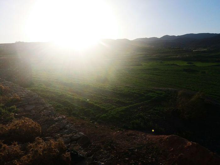 Rural Scene Fog Tea Crop Sunlight Agriculture Sun Hill Sunbeam Sky Landscape
