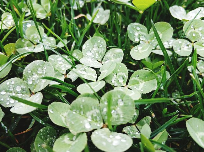 Leaf Nature Plant Growth Green Color Beauty In Nature Freshness