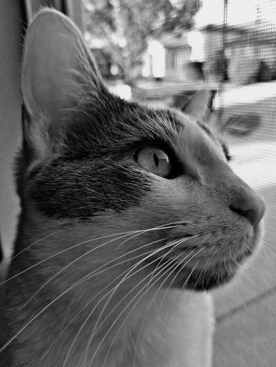 Pets Feline Domestic Cat Whisker Portrait Close-up Cat Animal Eye Snout EyeEmNewHere