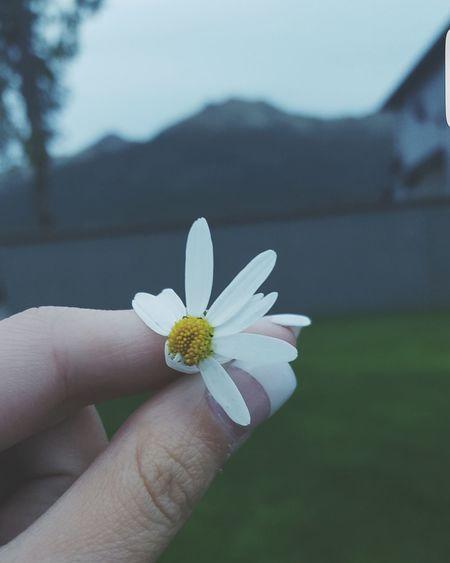 Daisy Flowers Flowerporn Eye4photography  PhotographyPorn