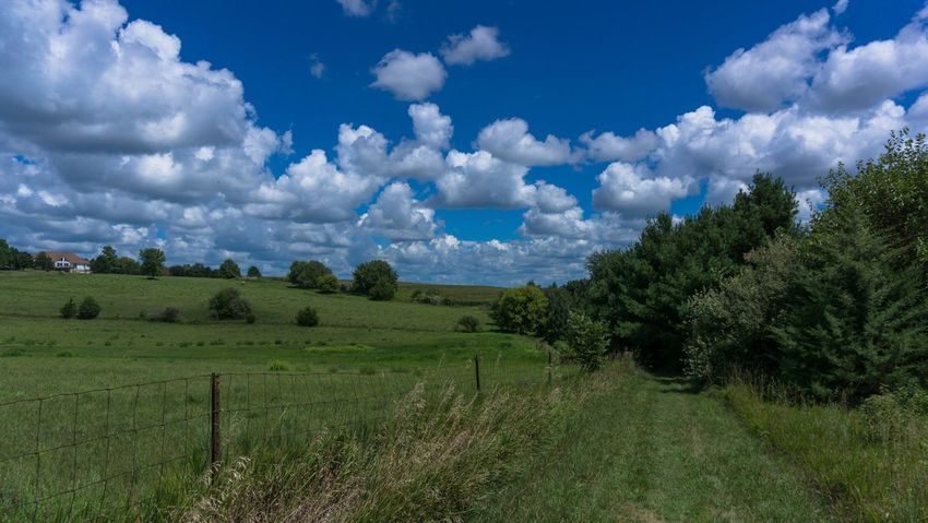 Field Sky Landscape Agriculture Nature Tranquility Beauty In Nature Tranquil Scene Scenics Cloud - Sky Tree No People Growth Rural Scene Blue Grass Outdoors Day