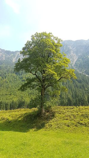 Tree Green Silence Mountain Mountain Herbs Outdoors No People Mountains Summer Sun Light And Shadow Healthy Air Green Color Landscape Farmland Agricultural Field Growing Countryside