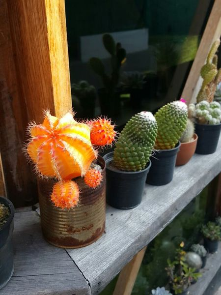 Cactus Plants Colors Rhythm Enjoying Myself