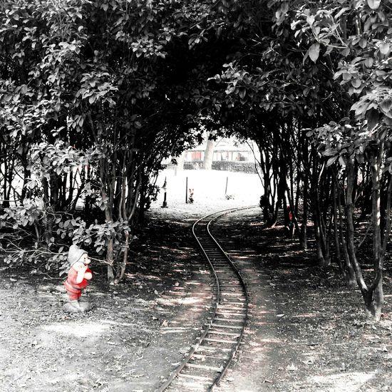 Ho smesso di aspettare i treni quando ho capito che il treno sono io Milanocity Parcosempione Nano Dotto Biancaneve Outdoors Day Nature Saturdaymorning Blackandwhite Photography Outdoor Photography Eyemphoto Eyemphotography Eyem Gallery Eyemblackandwhite