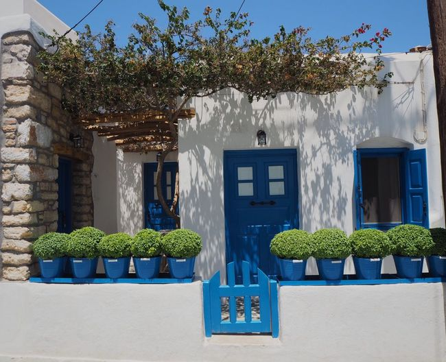 Plant Building Exterior Architecture Built Structure Building Growth Nature No People House Day Window Potted Plant Tree Blue Green Color Flowering Plant Outdoors Flower Wall - Building Feature Freshness