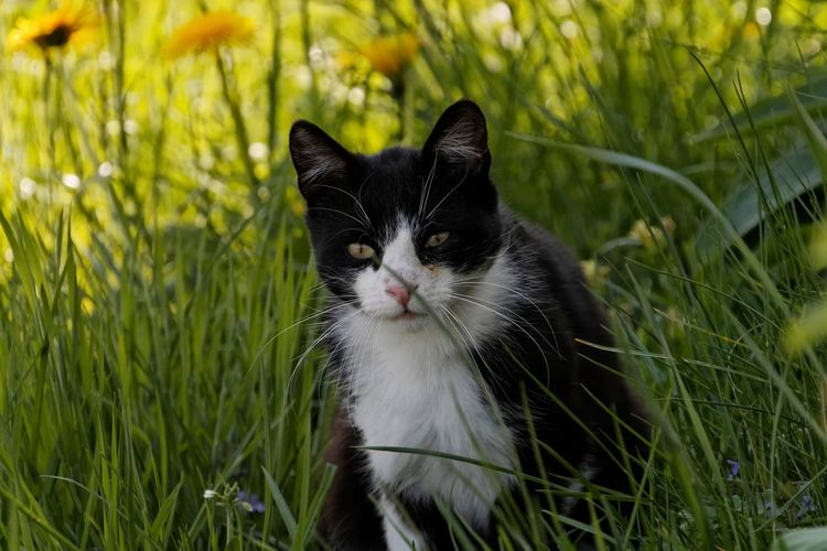 Animal Themes Close-up Day Domestic Animals Domestic Cat Feline Grass Mammal Nature No People One Animal Outdoors Pets
