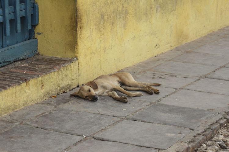 High angle view of sleeping dog