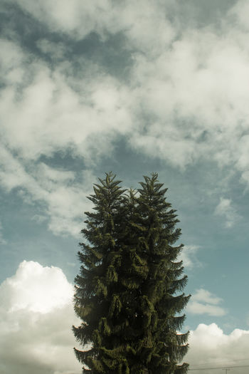 Cloud - Sky Plant Tree Nature Sky Beauty In Nature No People Day Tranquility Growth Coniferous Tree Pine Tree Scenics - Nature Outdoors Low Angle View Tranquil Scene Green Color Fir Tree Non-urban Scene Ominous