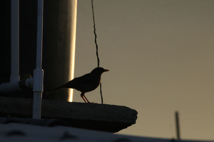 Seagull perching on pole against sky during sunset