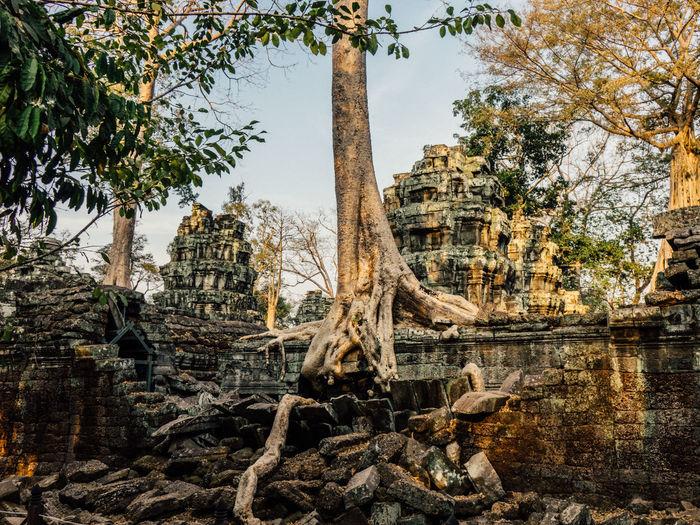 Buddha Buddhism Buddhist Temple Combodia Jungle Roots Of Tree Siem Reap Siem Reap, Cambodia Siemreap Temple Tree Trees