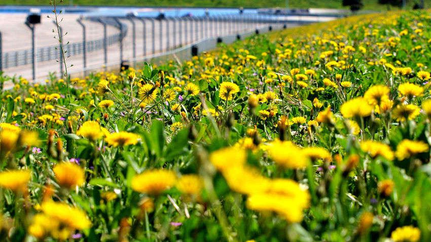 Growth Flower Nature Beauty In Nature Plant Green Color Yellow Close-up Field No People Outdoors Agriculture Day Freshness Greenhouse Flower Head Long Goodbye Le Var