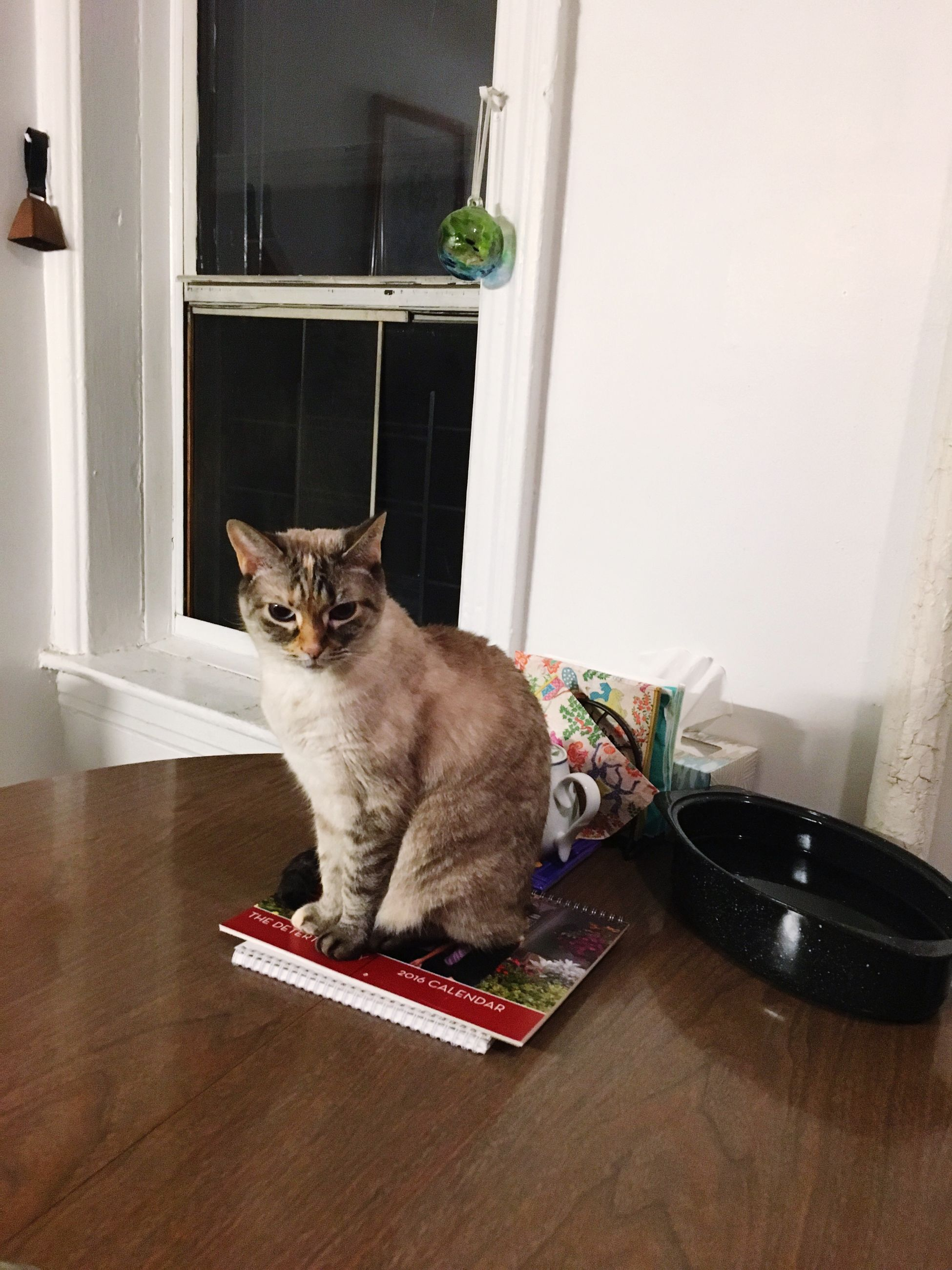 domestic cat, pets, one animal, domestic animals, animal themes, window, mammal, feline, window sill, full length, day, no people, portrait, outdoors, ajar