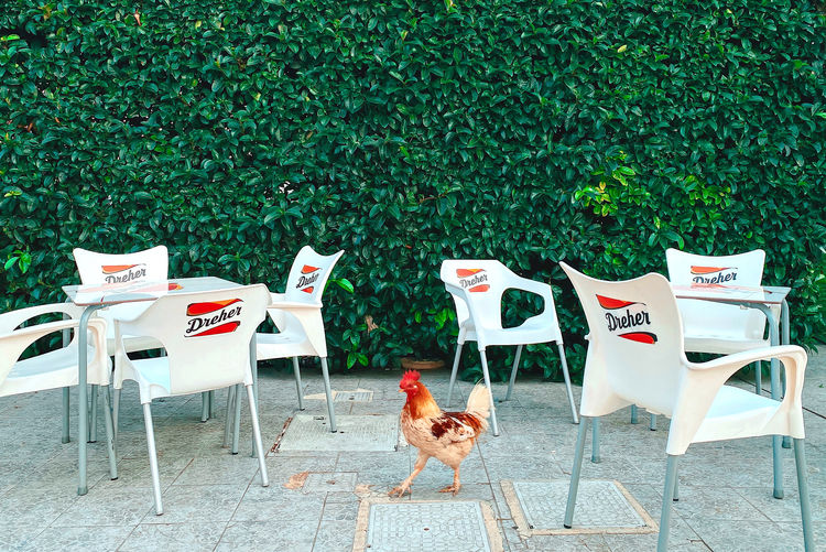 View of birds and chairs on table