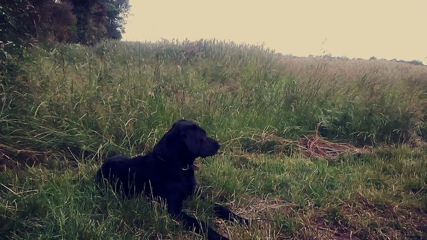 Dog Black Dog Grass Yesterday Evening Lovely Beautiful Enjoy The View Good Day Nature