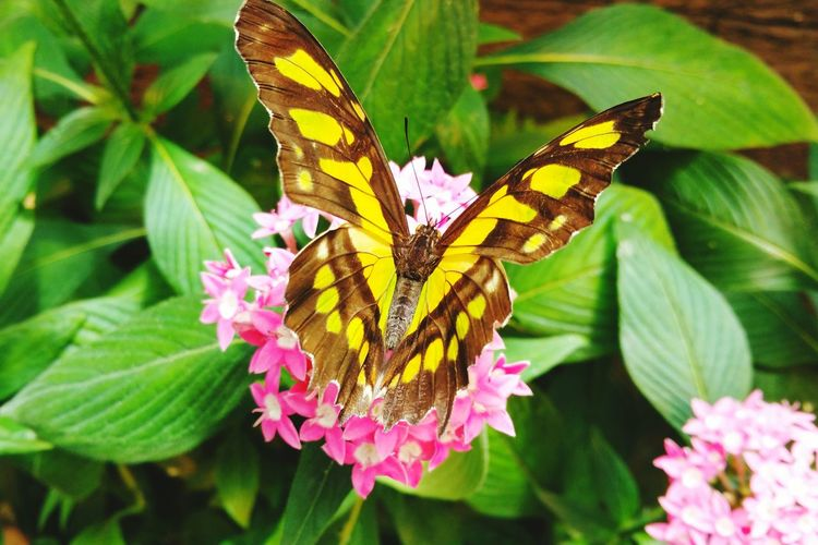 Nature Animals Cute Pets Butterfly Papillon
