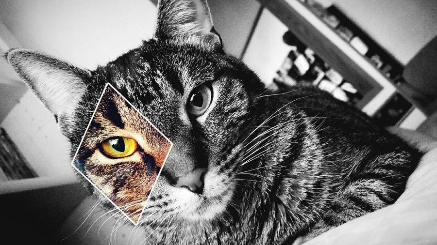 Pet Photography  Kitty!  Enjoying Life Pets Corner Hanging Out My Baby Blackandwhite Photography Black & White