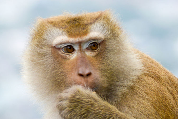Close-Up Of Monkey