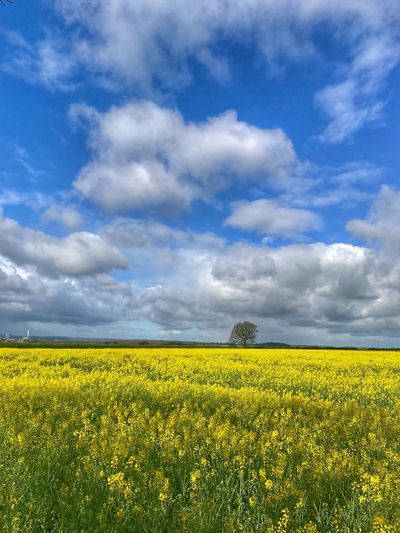 Spring clouds Field Beauty In Nature Yellow Sky Plant Agriculture Cloud - Sky
