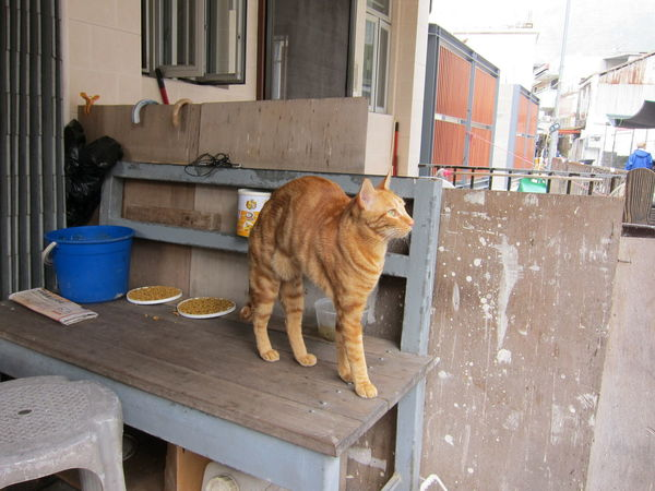 Cat Lovers Cat Photography Cat Watching Close-up Day Domestic Animals Domestic Cat No People One Animal Outdoors Stray Cat