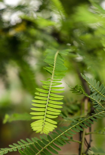 Close-up of fern leaves on field