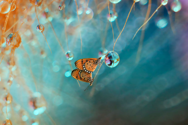 EyeEm Selects Butterfly - Insect Insect Animal Wildlife Animals In The Wild No People One Animal Nature Animal Themes Multi Colored Close-up Beauty Beauty In Nature Fragility Outdoors Day Perching Royal Person