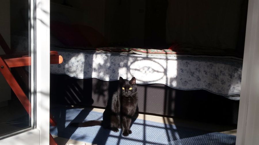 Animal Themes Black Cat Photography Blackcatlove Cat Lovers Cat Photography Cat Watching Catoftheday Pets
