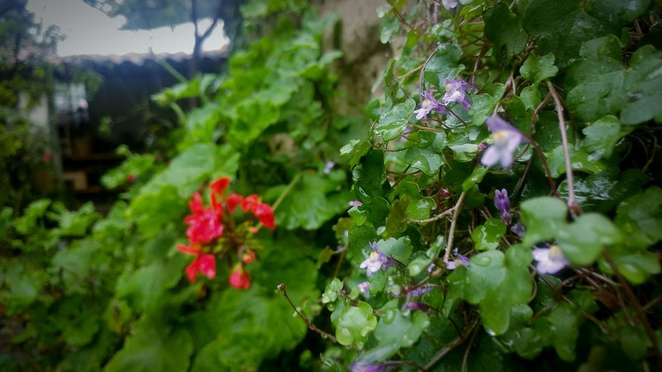 Flowers Plant Beauty In Nature Green Color Violeta First Eyeem Photo EyeEmNewHere Flora Y Fauna Muro  Abtract