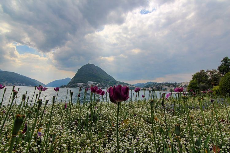 Flower Nature Beauty In Nature Sky Cloud - Sky Growth Plant Outdoors Day Tranquility Scenics Field No People Poppy Fragility Mountain Freshness Water Flower Head EyeEmNewHere EyeEmNewHere