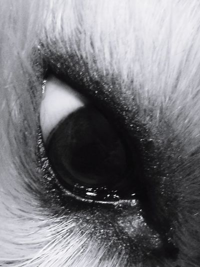 eye to eye Eye Dog Eye To Eye Crying Crying Eye