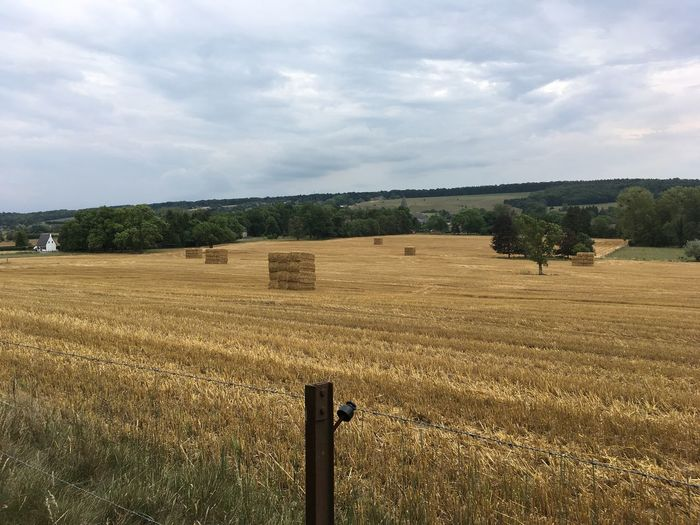 Farm Life Harvest Season Tree Landshape Outdoor Photography Straw