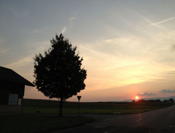 Evening Atmosphere Photography July 2013 Beauty In Nature Day Field Grass Growth Landscape Nature No People Outdoors Scenics Silhouette Sky Sunset Tranquil Scene Tranquility Tree Perspectives On Nature