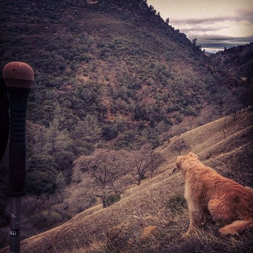 Cliffhanging with Bailey  Dogsofinstagram Goldenretriever Hiking