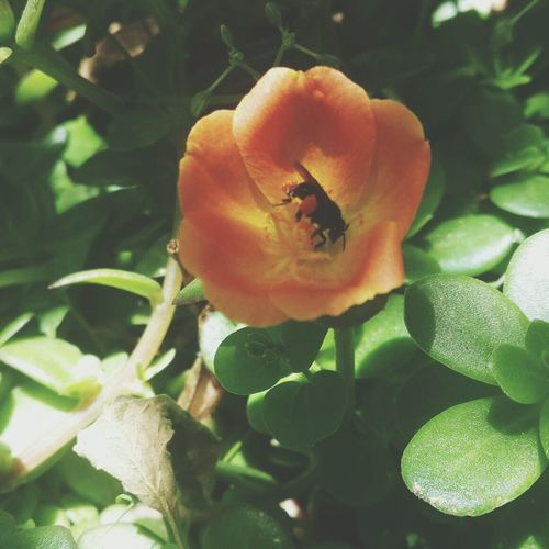 Taking Photos Bee