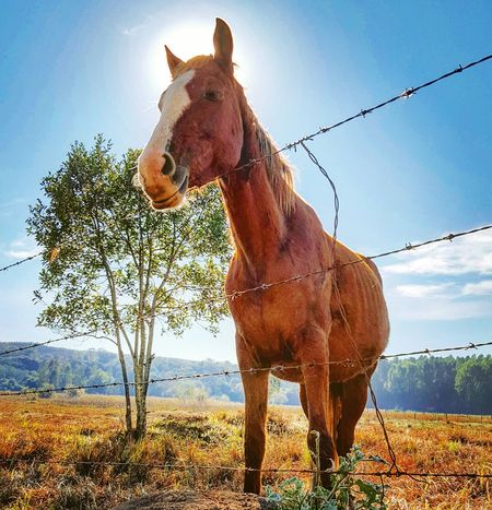 Cavalo Horse Solo Sunrise Solar Arvore