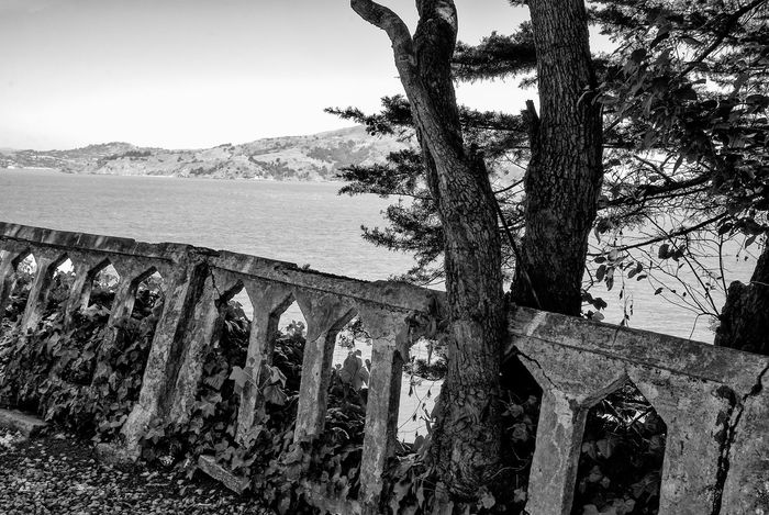 Old Concrete Fence, Alcatraz Island Beauty In Nature Black And White Photography Concrete Fence Day Derelect Growth Mountain Nature No People Outdoors Scenics Sky Tranquil Scene Tranquility Tree Tree Trunk Water