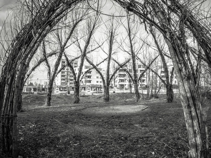 Vauban wwillows and houses Bare Tree Beauty In Nature Branch Day Houses And Windows Nature No People Outdoors Sky Tree Vauban Willos Willow Tree