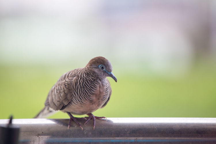 Close-up of bird perching on a railing