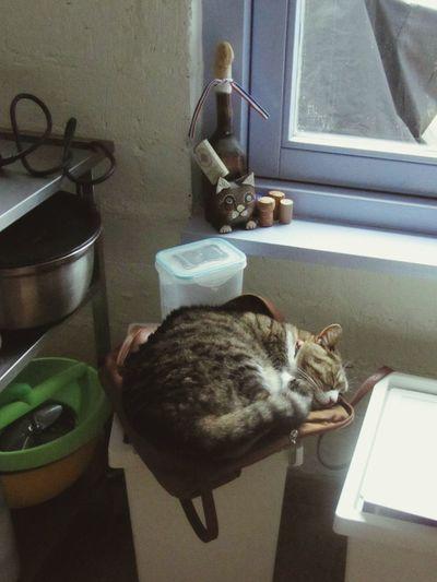 Cat Sleeping on Handbag  On Top Of... Flour Bin Kitchen Window Trolley Ornament Wine Corks Bowls Kitchen Clutter Bastet Tabby Cat Feline