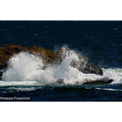 Here comes my favorite shots from my trip to Ryebeach and Longsands Beach last Monday. God I love it here! Katessa katessaproductions naturephotography photography photographer nature ocean ryebeach surf surfsup bodyboarding waves crest sky blue instagood instalike dailyig lighthouse nubblelight nubblelighthouse tocks oceanwaves water beautiful seagull oceanlife marineanimals