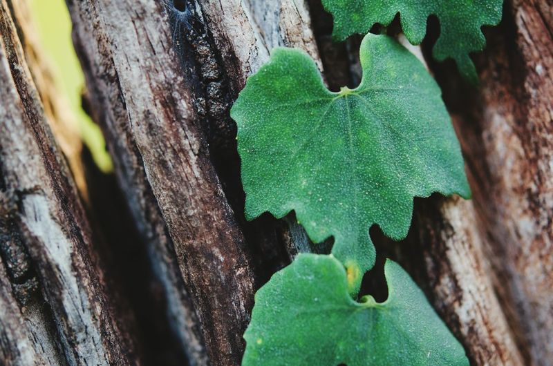 Close-up of leaf on tree trunk