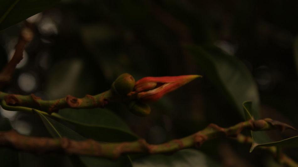 Flower Branch Close-up