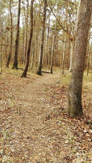 Fall/Cypress Swamp