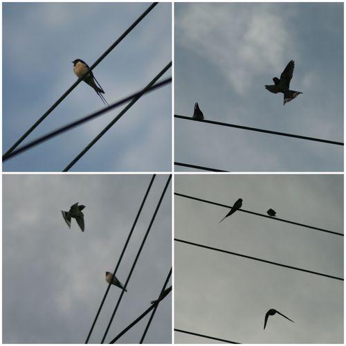 Swallows Streamzoofamily Photography EyeEm Birds EyeEm Best Shots - Nature