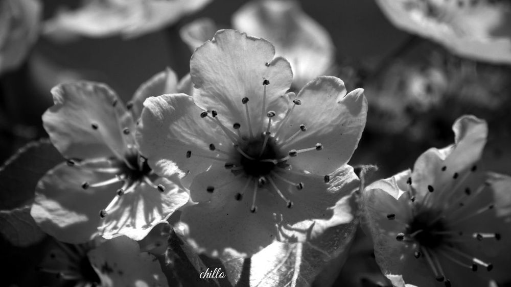 Sony A6000 Blackandwhite Blackandwhite Photography Eye4photography  EyeEm Best Shots Darkness And Light Flowerporn Macro EyeEm Nature Lover The Places I've Been Today