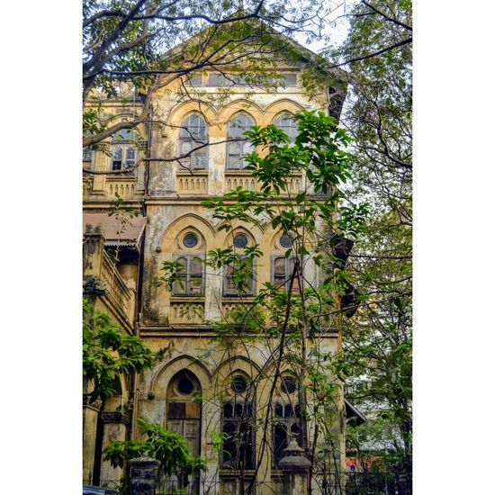 Architecture Building Exterior Tree Low Angle View Outdoors Day Mumbaiphotography No People First Eyeem Photo Colors Nature Photography Beauty In Nature Tree EyeEm