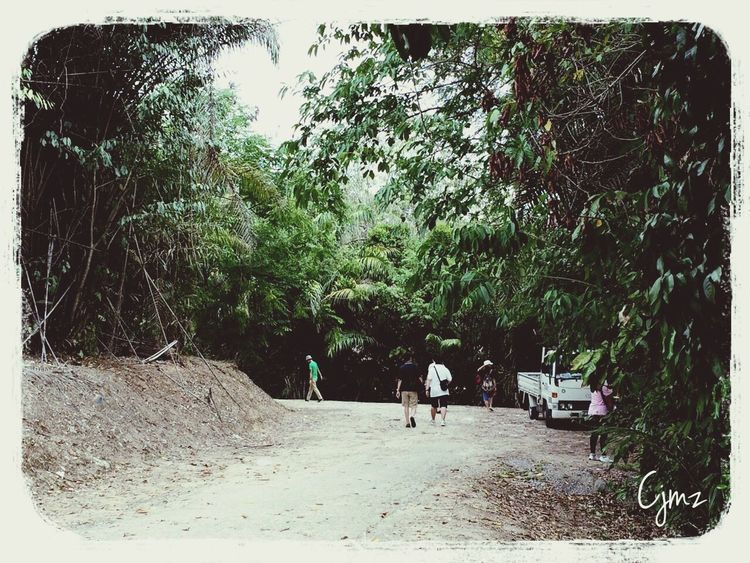 Thru' the bush EEA3 - Kota Kinabalu